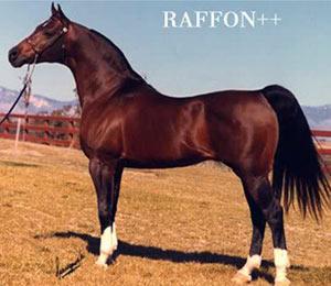 Raffon