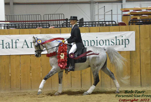 2012shn mirage dressage ring roses NH 17845